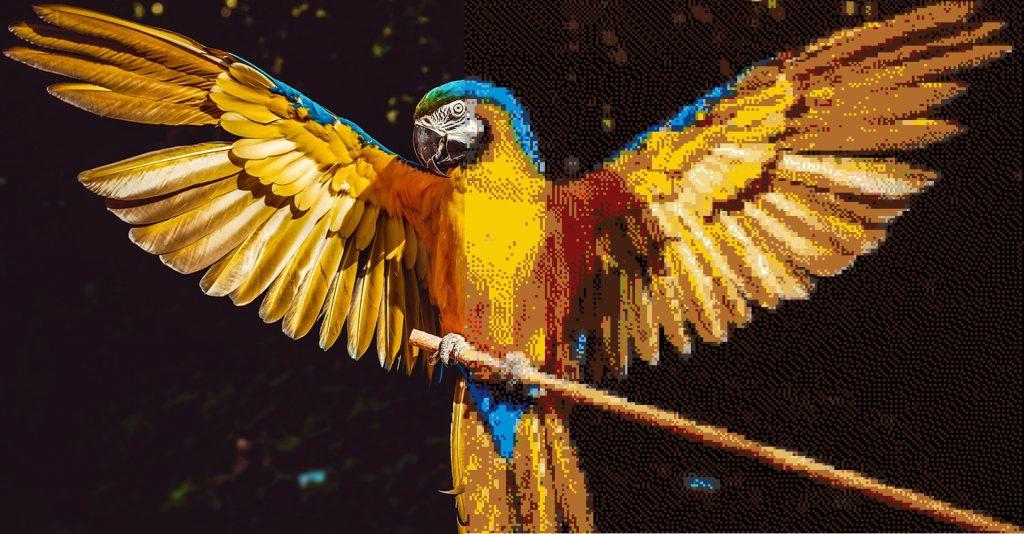 Papegaai als een feniks